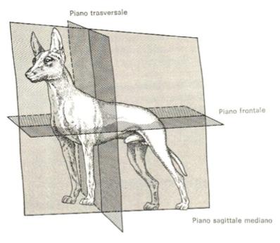 cignostica-figura-1