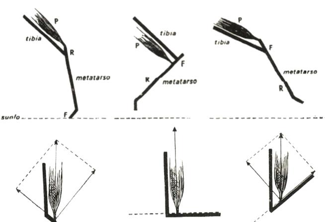 cignostica-figura-4