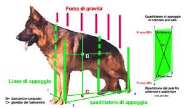 cignostica-figura-5