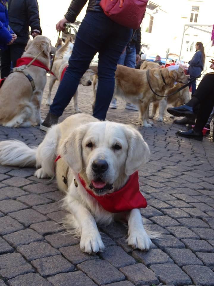 Natale Con I Golden Retriever A Napoli Amici Del Golden Retriever
