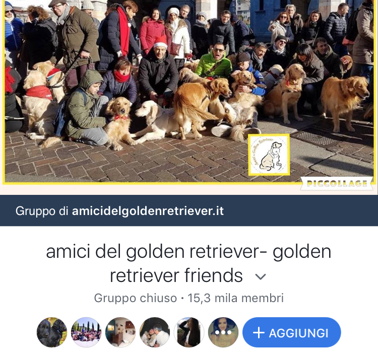 Amici del golden retriever