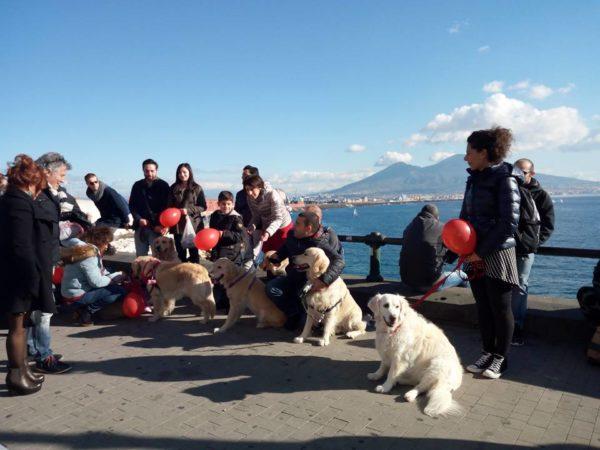 Passeggiata Con I Golden Retriever A Napoli Amici Del Golden Retriever